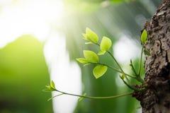 Wiosny tło jaskrawy świeży Zdjęcie Stock