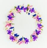 Wiosny tło, kwiaty fotografia stock