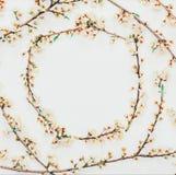 Wiosny tło od kwiecenia rozgałęzia się z białymi kwiatami Zdjęcie Royalty Free
