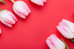 Wiosny tło smakołyk menchii tulipany zdjęcia stock