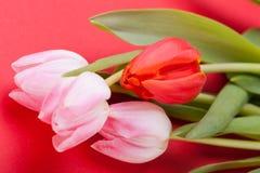 Wiosny tło smakołyk menchii tulipany zdjęcie stock