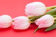 Wiosny tło smakołyk menchii tulipany obrazy stock