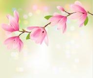 Wiosny tło z okwitnięcia śniadanio-lunch różowi kwiaty Zdjęcie Stock