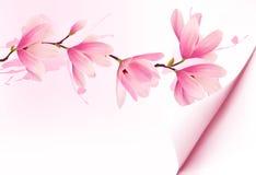 Wiosny tło z okwitnięcia śniadanio-lunch różowi kwiaty Zdjęcie Royalty Free