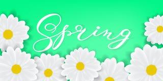 Wiosny tło z ręki literowania wiosny writening słowem, białymi stokrotkami lub gerbers, royalty ilustracja