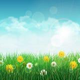 Wiosny tło z zieloną trawą i niebem Zdjęcia Royalty Free