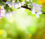 Wiosny tło Fotografia Royalty Free