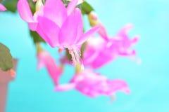 Wiosny tło dla strona internetowa sztandaru Zdjęcie Royalty Free