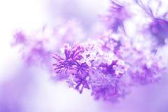 Wiosny tło wiosna lili kwiaty Fotografia Royalty Free