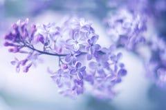 Wiosny tło wiosna lili kwiaty Obraz Royalty Free