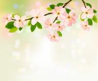 Wiosny tło z kwitnie drzewem   Fotografia Stock