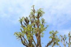 Wiosny thall 2017 pustynia Obrazy Royalty Free