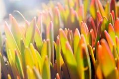 Wiosny trawa w słońca jaskrawym słońcu Zdjęcie Stock