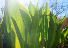 Wiosny trawa w słońca jaskrawym słońcu Zdjęcia Royalty Free
