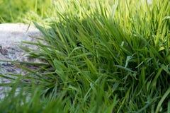 Wiosny trawa z kamieniem świeżość zdjęcia stock