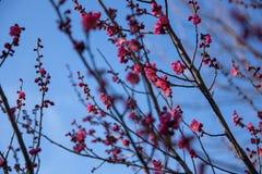 Wiosny trawa z kamieniem świeżość zdjęcia royalty free