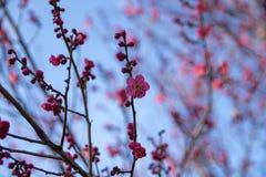 Wiosny trawa z kamieniem świeżość obraz royalty free