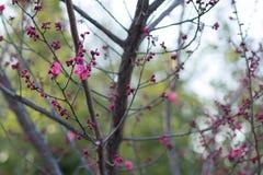 Wiosny trawa z kamieniem świeżość fotografia stock