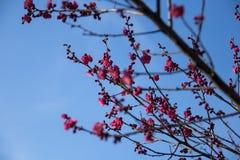 Wiosny trawa z kamieniem świeżość obrazy royalty free