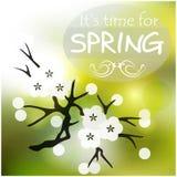 Wiosny wiśni gałąź Zdjęcia Royalty Free