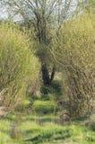 Wiosny wiejska droga Zdjęcie Stock