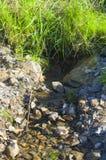 Wiosny woda Obrazy Royalty Free