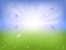 Wiosny wody krople Fotografia Royalty Free