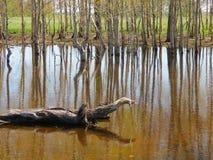 Wiosny wysoka woda Obrazy Stock
