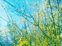 Wiosny życie Zdjęcia Royalty Free