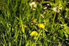 Wiosny życie Obraz Royalty Free