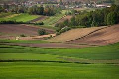 Wiosny zieleni pola Obrazy Stock