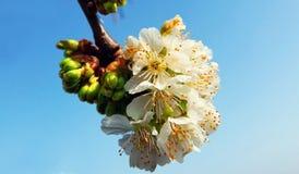 Wiosny zielenieć Zdjęcie Stock