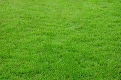 wiosny zielona trawa dla projekta Fotografia Royalty Free