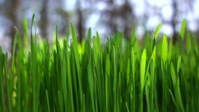 Wiosny zielonej trawy zbli?enie