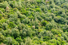 Wiosny zielony lasowy tło Obrazy Royalty Free