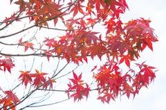 Wiosny zmiany kolor Obraz Stock