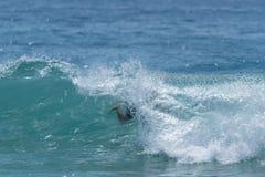 Wipe out! - Malibu. California. Wipe out! - Surfing in Malibu. California Stock Photos