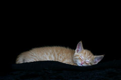 Wiped Out. Sleeping Kitten Royalty Free Stock Images