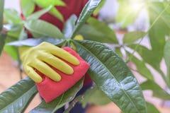 Wipedamm från houseplants Fotografering för Bildbyråer