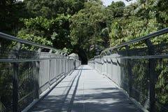 Wipfelwaldweg, südliche Kanten schleppen in Singapur Stockbild