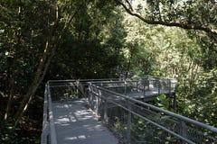 Wipfelwaldweg, südliche Kanten schleppen in Singapur Stockfotos
