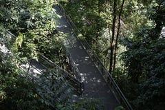 Wipfelwaldweg, südliche Kanten schleppen in Singapur Stockbilder