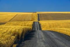 Żwir droga przez pszenicznych poly Obraz Stock