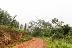 Żwir droga w lesie Obrazy Royalty Free