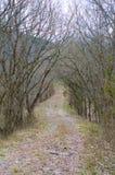 Naturalna Zakrywająca droga Obraz Stock