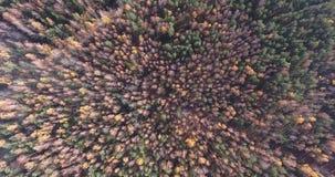 Wir entfernen uns über dem Herbstwald stock video footage