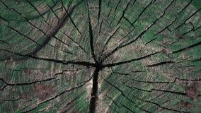 Wir strzelaj?cy - drewniana tekstura z star? zielon? farb? zbiory wideo