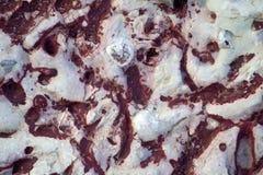 Wirbellose Fossilien Stockbild