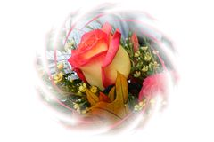 Wirbelnde Rose Stockfotografie