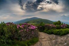 Wirbelnde Wolken über Jane Bald mit Rhododendron lizenzfreie stockbilder